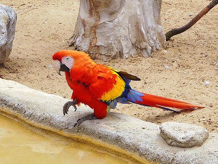 Un ara au zoo de la Palmyre