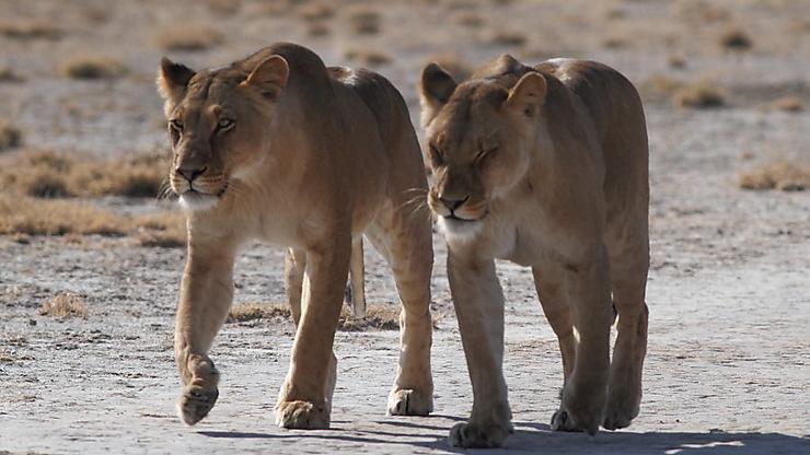 Désert du Kalahari, Botswana