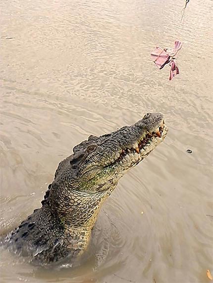 Jumping crocodiles cruise
