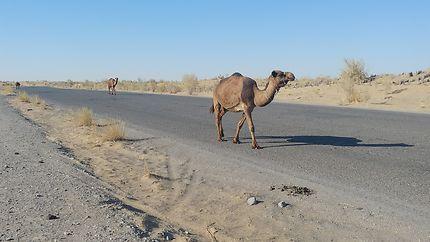 Les routiers du désert