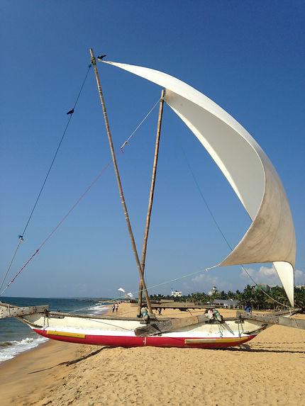 Catamaran à Negombo