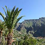 Palmier à Masca