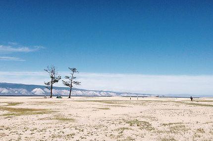 Deux pins sur l'île d'Olkhon