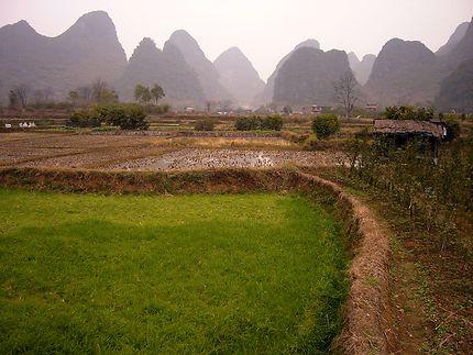 Les rizières de Yangshuo