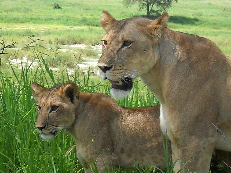 Parc national de Tarangire, Tanzanie
