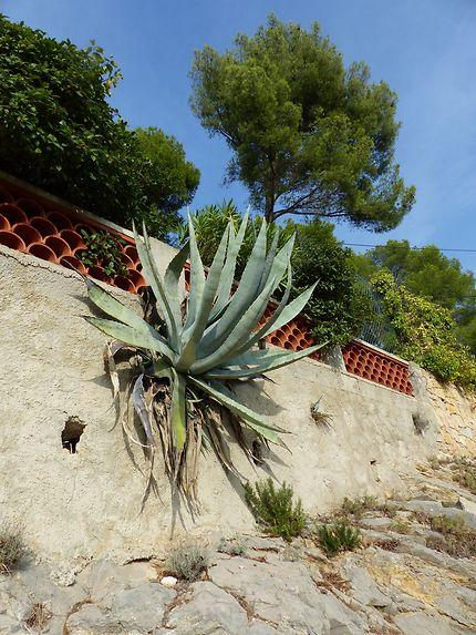 Une endroit insolite pour une plante