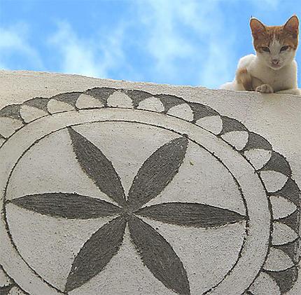 Chat à Pirghy