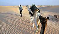 La Tunisie, de la Méditerranée aux mers de dunes