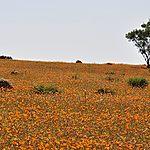 Champs des fleurs marguerites