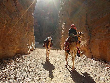 Chamelier à Petra