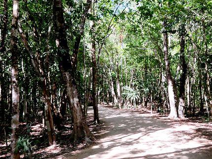 """Forêt """"dite jungle"""" très bien entretenue"""