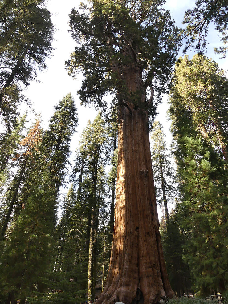 7 - Parc national de Sequoia (Californie)