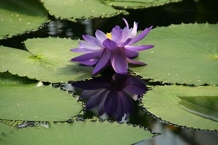 Aux Kew gardens