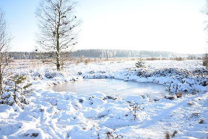 L'hiver dans les Fagnes