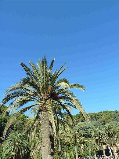 Palmier en ville