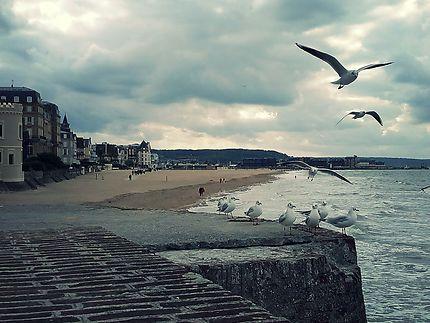 Mouettes à Trouville-sur-Mer