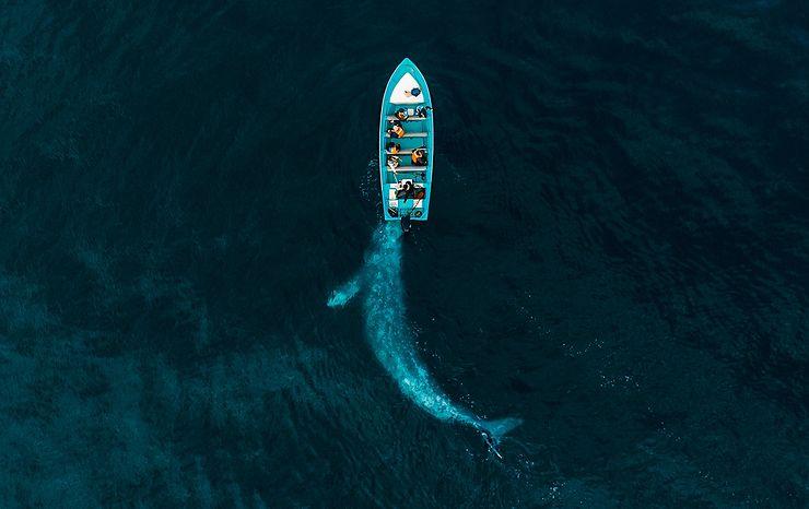 Baleine jouant avec des touristes, Puerto Adolfo Lopez Mateos, Baja California, Mexique