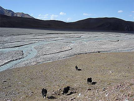 Paysage kirghize avec yaks