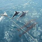 Visites de dauphins!!!