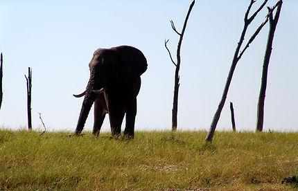 Eléphant au bord du lac Kariba