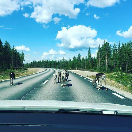 Rennes en Laponie suédoise, à Kiruna