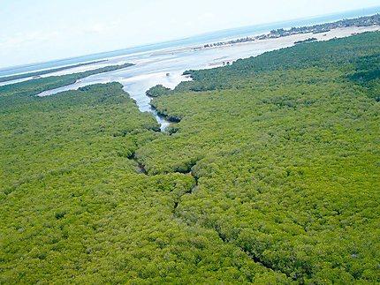 Mangrove vue du ciel