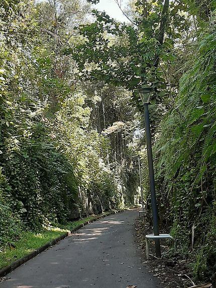 Chemin végétal