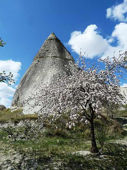 Cherry blossom sur la vallée blanche