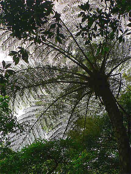 Toile d'araignée végétale