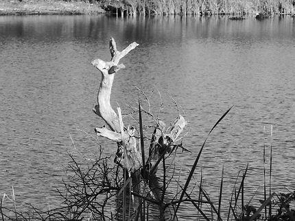 Un cerf en bois, les pattes dans l'eau à Wallis