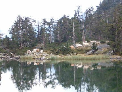 Le lac des Laquettes, vallée d'Aure