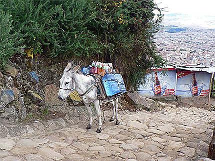 Sur les pentes du Cerro Montserrat