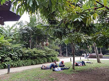 Jardin Botanique De Medellin Jardin Botanico De Medellin