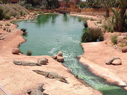 Crocopark