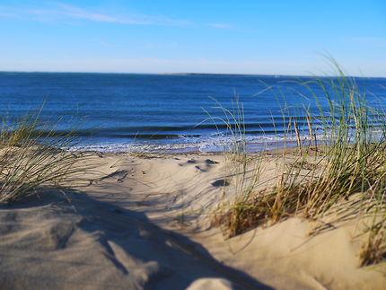 Oyat sur la dune du Pilat