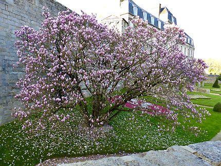 Arbre en fleurs sur les remparts