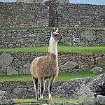 Le dernier empereur du Machu Picchu