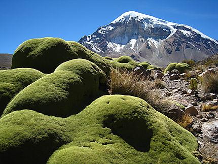 El Nevado Sajama