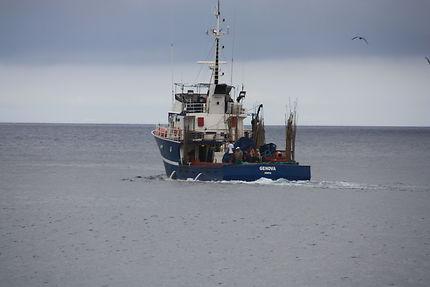 Départ à la pêche, Horta