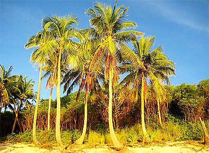 Palm's Of Manta Ray