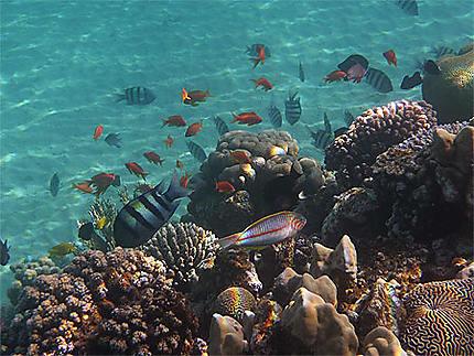 Snorkeling à Taba