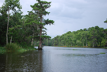 Bayou de Thibodaux