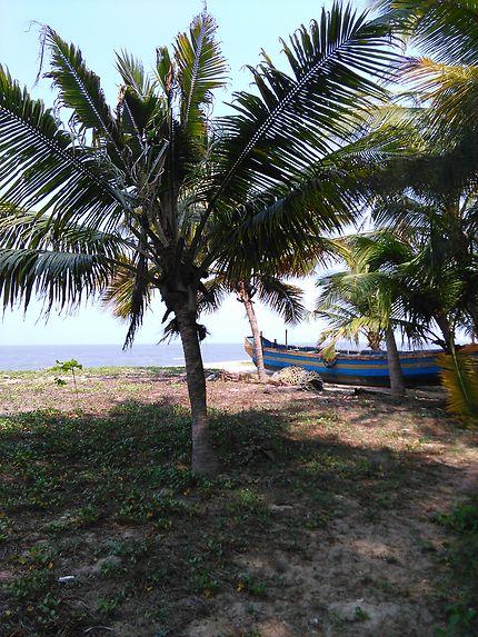 Marari beach en Inde