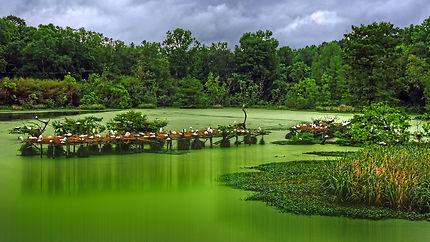 Lafayette jungle gardens