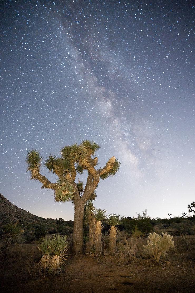 Joshua Tree, Californie