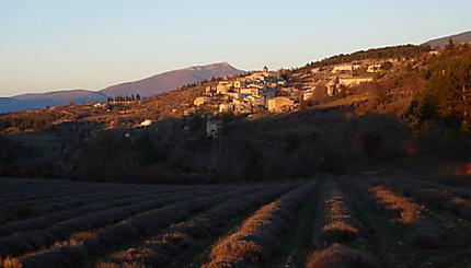 Village d'Aurel au milieu de la lavande