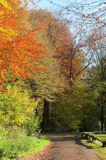 Couleurs d'automne à Le Roeulx