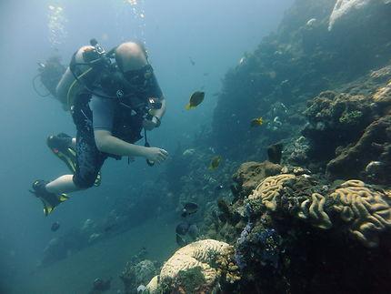 Plongeur admirant le corail à Amed