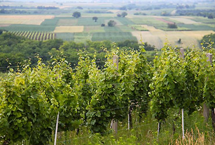 Vignobles et gastronomie à Ilok et en Syrmie