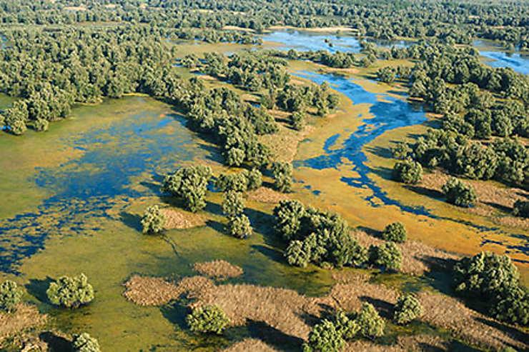 Le parc naturel de Kopački  Rit, l'« Amazonie d'Europe »